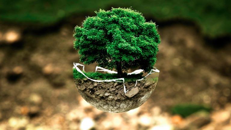 Árbol protegido